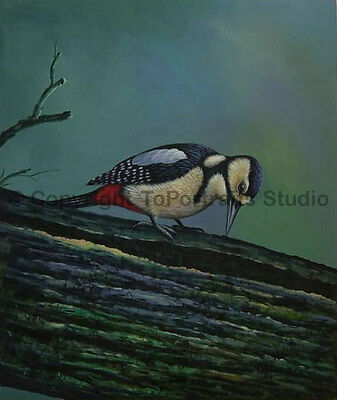 "Hairy Woodpecker, Original Animal Hand Painted Oil Painting on Canvas, 30"" x 36"""