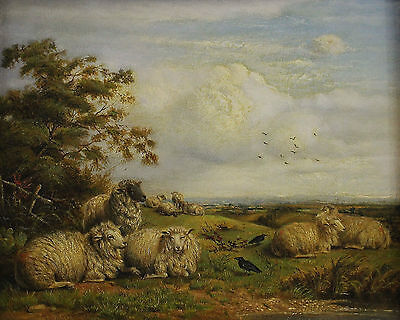 Thomas Sidney COOPER (1803-1902) - Resting Flock of sheep