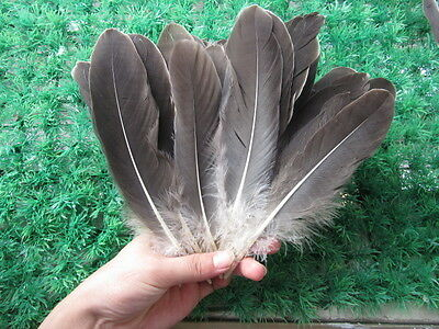 Wholesale! Beautiful natural  goose feather 15-22 cm 10-200 pcs Free Shipping