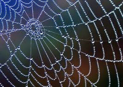 Spirit of the spider attunement-Knitters, weavers, wirewrappers & lacemakers