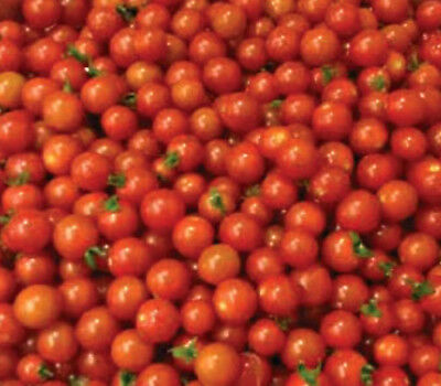 TOMATO sweetie 20 seeds for your edible vegetable garden SWEETEST CHERRY TOMATO