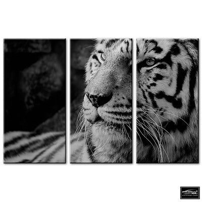 STUNNING WHITE TIGER BLACK N WHITE CANVAS PICTURE PRINT WALL ART #2132
