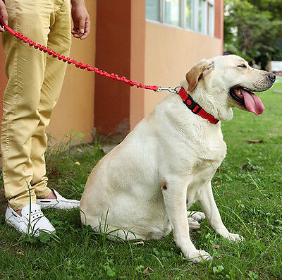 High End Elastic Nylon Dog Connection Leashes, Pet Leads Dog Leads