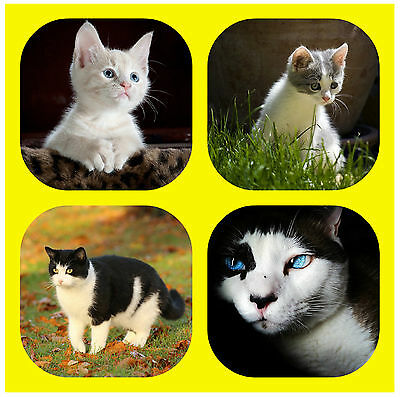 Cat / Kitten Personalised Fun Coasters With Your Photos - Gift/ Xmas / B/day