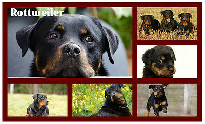 Rottweiler - Novelty Souvenir Fun Fridge Magnet - Brand New - Gift