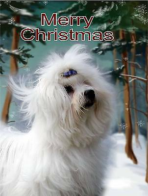 Maltese Dog A6 Christmas Card Design XMALTESE-1 by paws2print