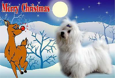 Maltese Dog A6 Christmas Card Design XMALTESE-2 by paws2print