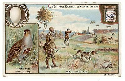 CHASSE.PERDRIX GRISE.GALLINACéS.