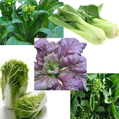 Asian greens Vegetable Seed Collection 750 seeds 5 individu packets easy to grow