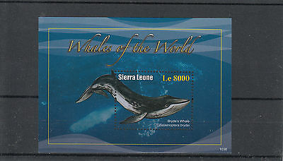 Sierra Leone 2010 MNH Whales of the World 1v S/S I Bryde's Whale