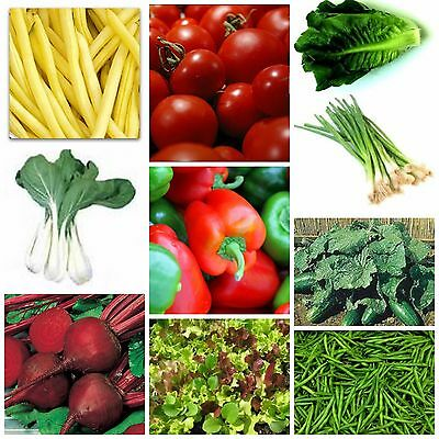 Vegetables for pots or small gardens  10 varieties over 750 seeds SPRING SUMMER