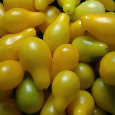 TOMATO YELLOW PEAR  30 seeds Heirloom vegetable seeds GREAT COLOUR ACID FREE