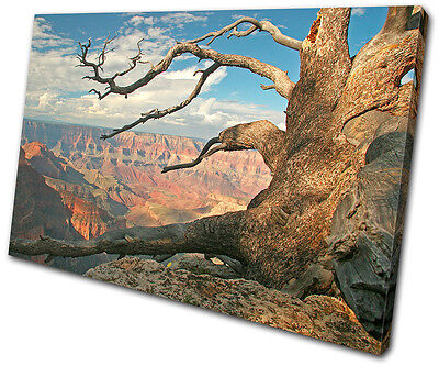 Landscapes Grand Canyon Tree  SINGLE CANVAS WALL ART Picture Print VA