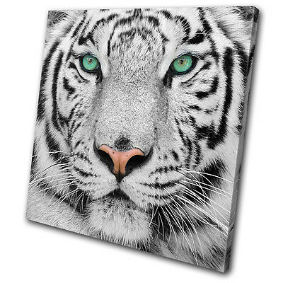 Animals Siberian Tiger Eye SINGLE CANVAS WALL ART Picture Print VA