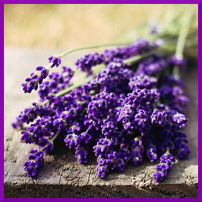 10 mL Fragrance Oil Scent Concentrate ❀ Candle Making Soap Bath Bomb ❀ Lavender