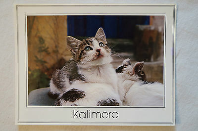 Kalimera - Greece - Collectable - Postcard.