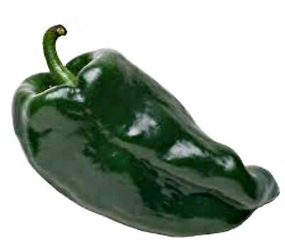 CHILLI POBLANO ANCHO  25 seeds mild chilli pepper for edible vegetable garden