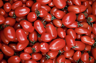 Vegetable Tomato Cherry Roma 100 Finest Seeds
