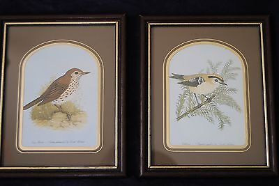 Two(2) framed bird print/picture Gold Crest and Long Thrush by David Andrews