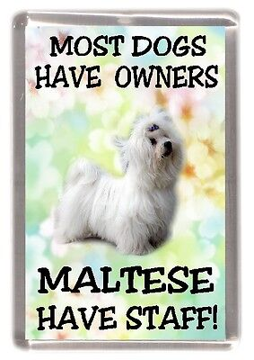 "Maltese Terrier Dog Fridge Magnet ""Most Dogs Have Owners Maltese Have Staff"""