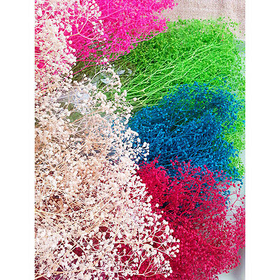 Natural Dried Dry Flowers Baby's Breath  Crafts DIY Jewelry Bracelet  Making