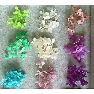 Natural Real Dried Dry Flowers Home Floral Crafts DIY Decoration Materials