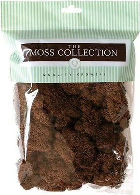 Preserved Reindeer Moss 108.5 Cubic Inches Walnut QG2053
