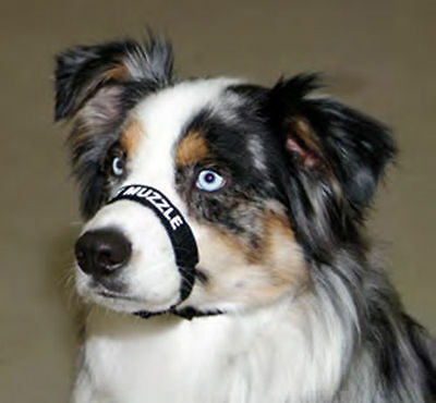 Coastal Comfort Muzzle for Dogs Adjustable FREE SHIPPING NEW WITH TAG