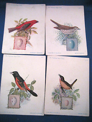 Fourteen Singer Series Bird Cards / Mostly Dated 1920's