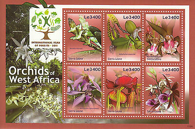 Sierra Leone 2011 MNH Orchids of West Africa 6v M/S I Year Forests Flowers