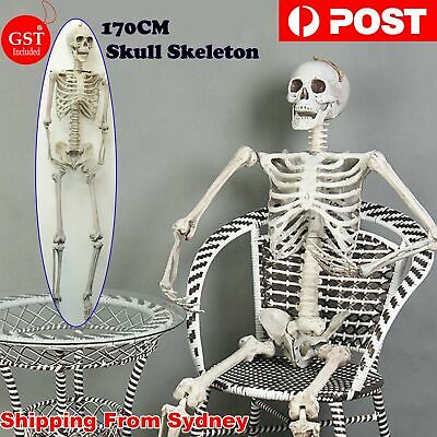 170cm Human Skeleton Life Size  Skull Full Body  Anatomy Model Halloween Medical