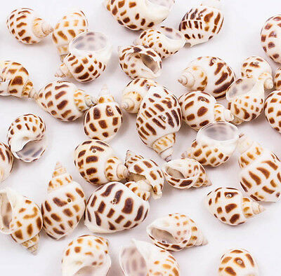 Spotted Babylon Natural Thai SEA SHELL Craft DIY Drilled Hole Bead Jewelry A1323