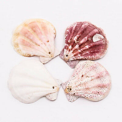 RADIATED SCALLOP Thai 35-45mm SEA SHELL Craft Drilled Hole Bead Jewelry A1312