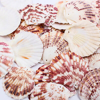 Big Scallop Natural 50-65mm Thai SEA SHELL Craft Home Decor Beads Jewelry A1295