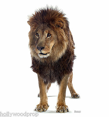 African Lion Lifesize Cardboard Standup Standee Cutout Poster Figure Cecil The