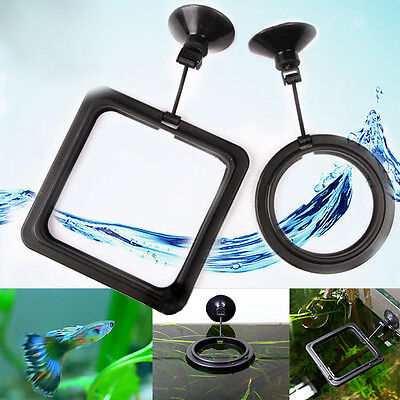 Aquarium Fish Tank Feeding Ring Floating Food Tray Feeder with Suction Cup New