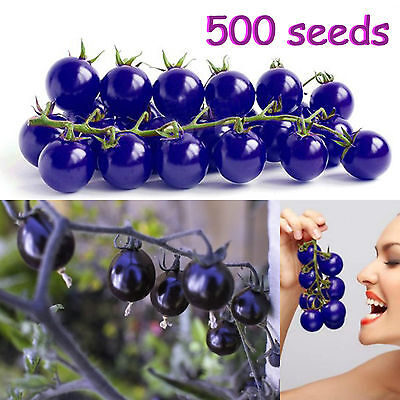 Purple Cherry Tomatoes Seeds Balcony Fruits Vegetables Potted Bonsai 500 pcs