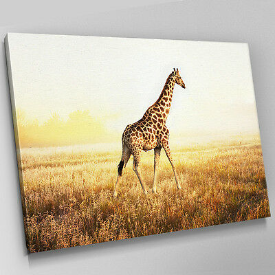 Outstanding Giraffe Canvas Wall Art Ensign - Wall Art Design ...