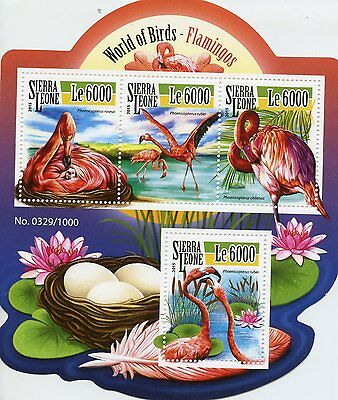 Sierra Leone 2015 MNH Flamingos 4v M/S Greater Chilean Flamingo Birds Stamps
