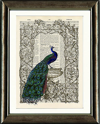 Old Antique Book page Art Print - Vintage Peacock 3 Dictionary Page Wall Art