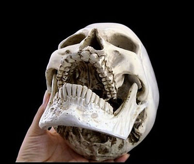 The Fine Arts Human Skull Replica Resin Model Medical Lifesize Realistic NEW 1:1