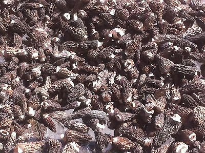 10 LBS Fresh 1 LB Dried Montana Morel Mushrooms Top Quality Grade A 2016