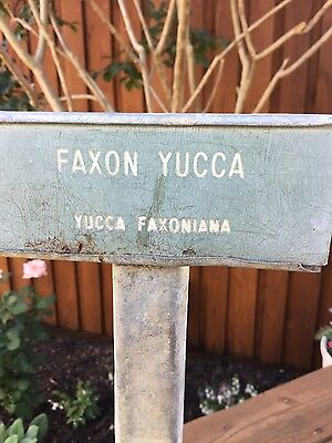 Vintage Garden Plant/tree Stake Label Sign Faxon Yucca -Yucca Faxoniana Metal
