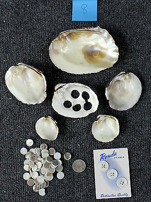 Vintage Pearl Clam Shells & Blanks Muscatine Iowa Mother Of Pearl Mississippi #8