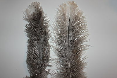 10 First Grade UNDYED NATURAL Ostrich Blondene Feathers 350-400 mm length