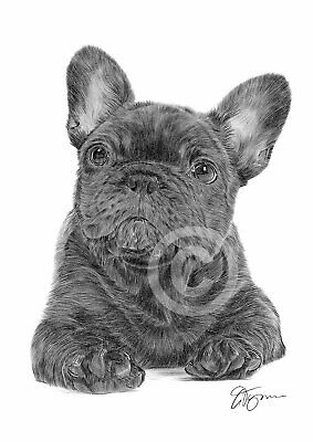 FRENCH BULLDOG PUPPY art pencil drawing print A4 only signed by artist Dog