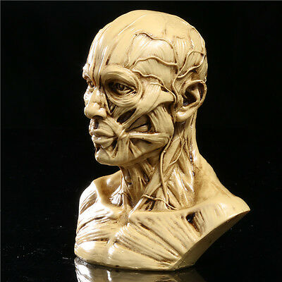 NEW 10cm Human Anatomical Anatomy Skull Head Muscle Bone Medical Model