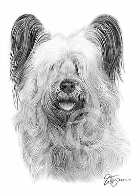 A4 sizes signed by artist ENGLISH BULL TERRIER Pencil Drawing Print A3