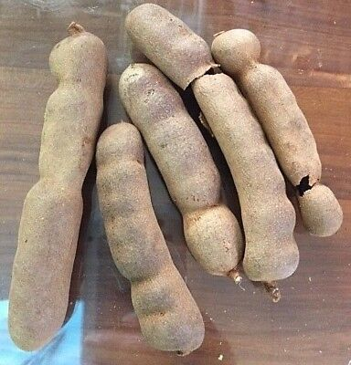 5 Fresh Mexican Sweet Tamarind Seeds Great Tasting Tropical Fruiting Plant