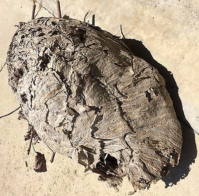 Large 18 X 9in Hornet's Nest (Bee) With Branches Twigs Leaves Good Cond